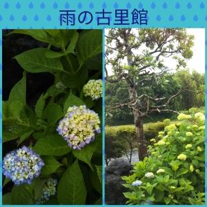 Photocollage_20190607_193925320